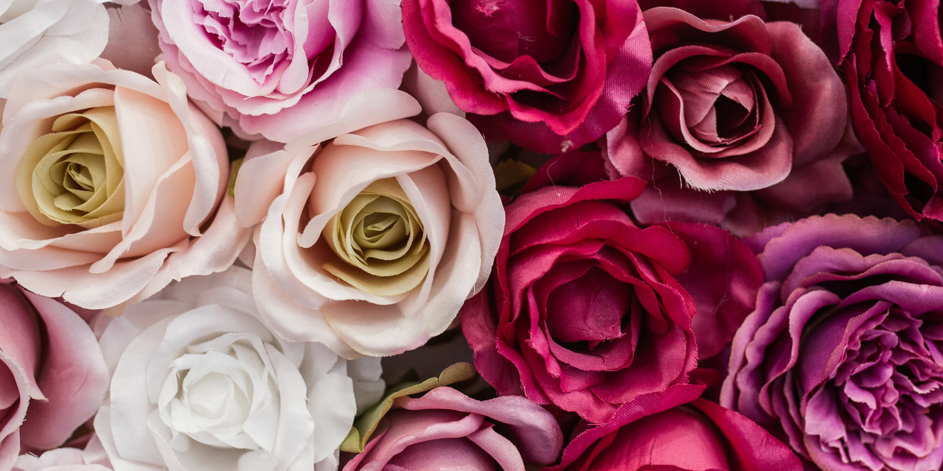 Banner image featuring an assortment of roses, via Freepik Licensed through Student Affairs.